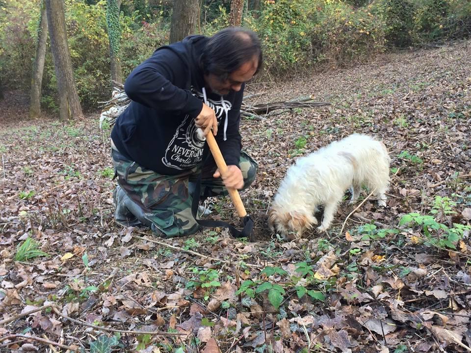 Lagotto addestramento cane da tartufo