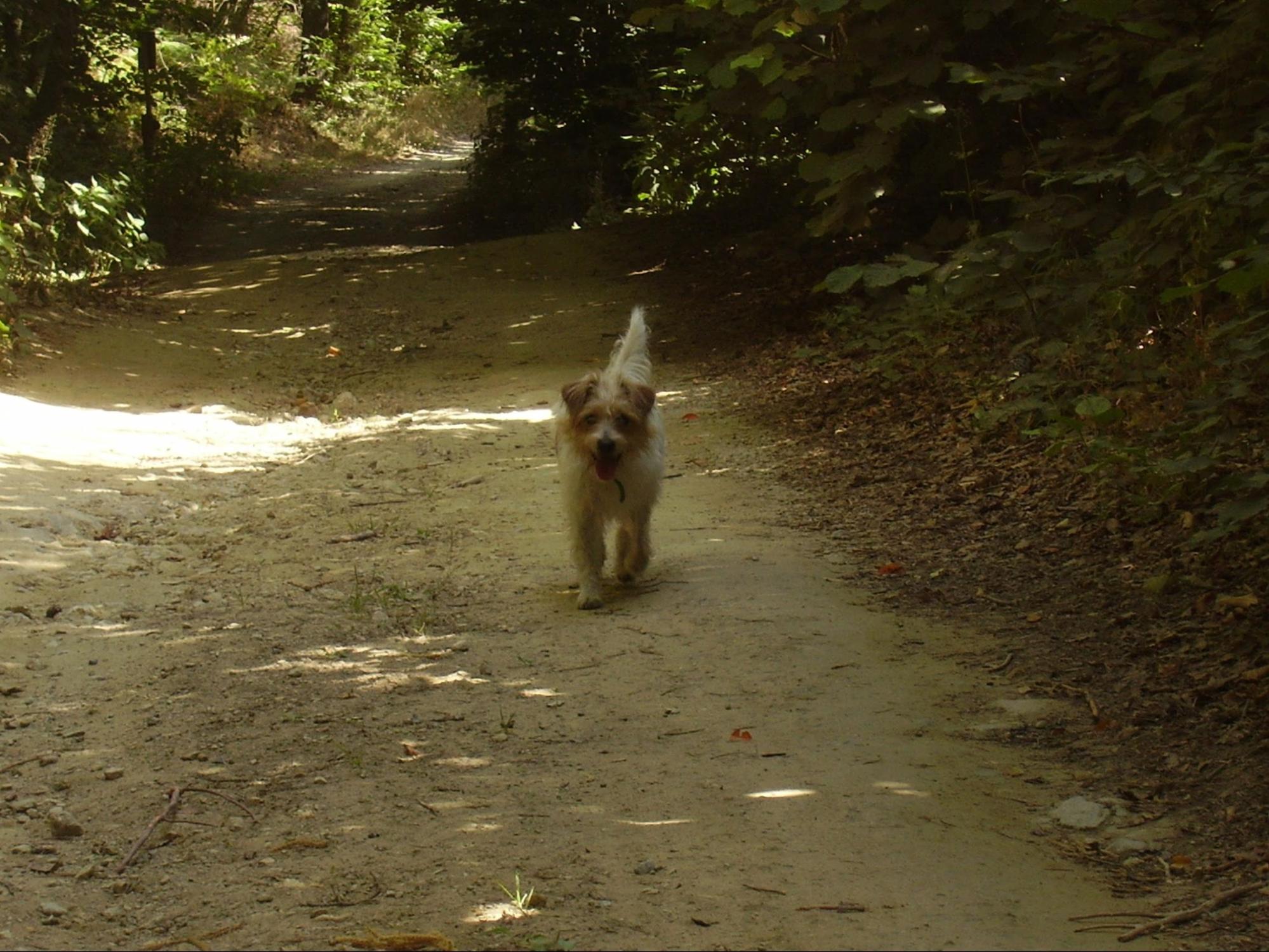 Cane da tartufo nel bosco