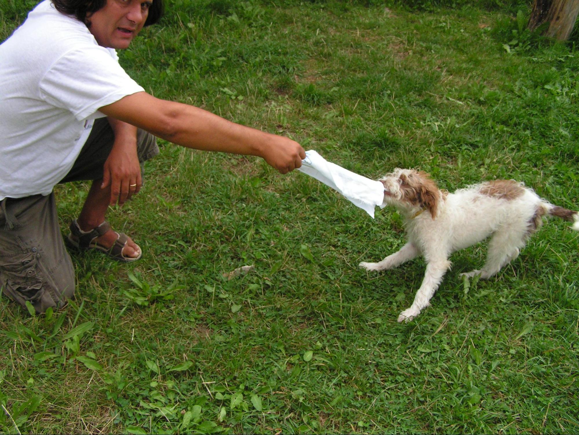 Cucciolo addestramento al tartufo avviamento gioco